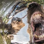 Nature Photographer of the Year Contest 2017 Winners